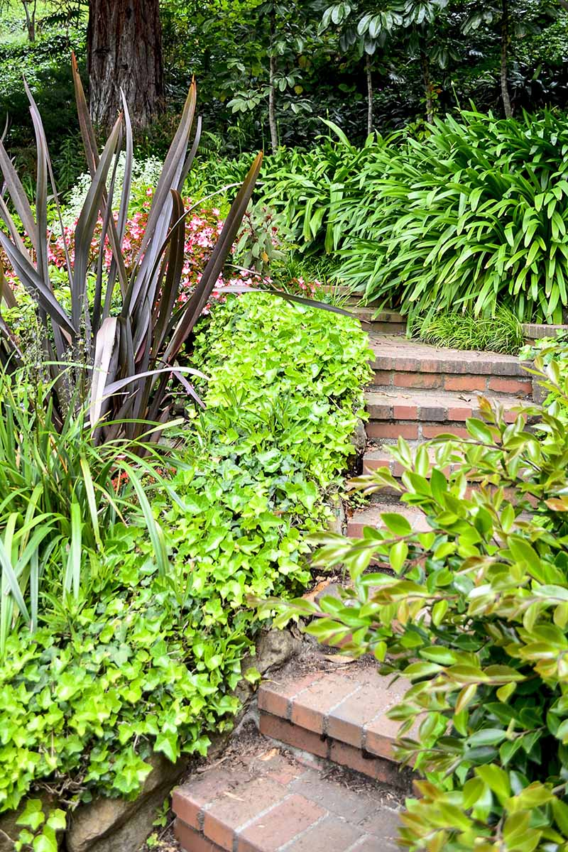 A paved garden staircase winds upwards, between plants on either side. Horizontal image.