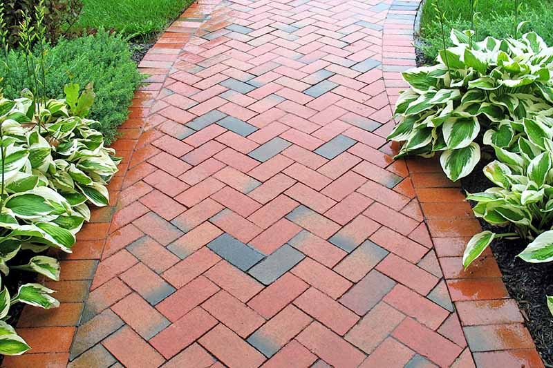 Horizontal image of a wet brick pathway in the garden, between two areas planted with hostas and other greenery.