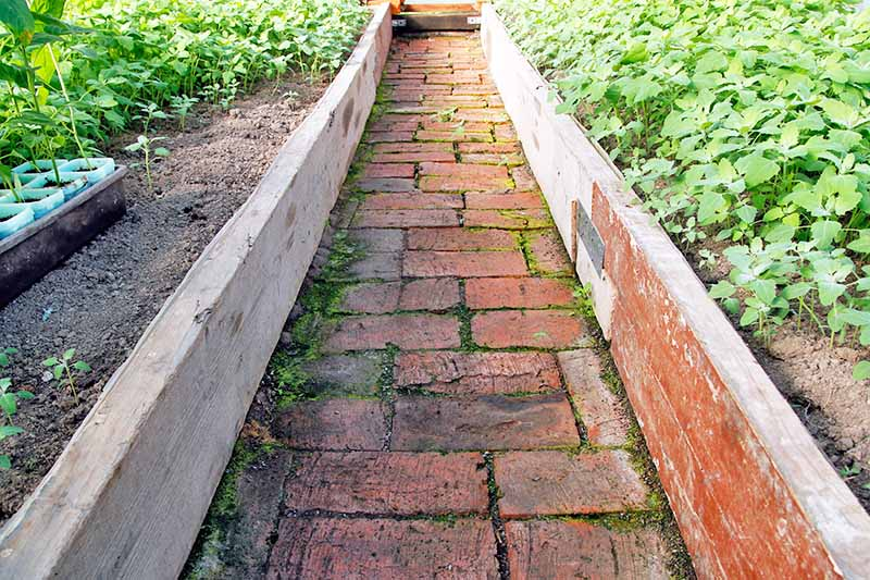 Horizontal image of a pathway with converging lines nearly meeting at the top of the frame, with raised garden beds on either side.