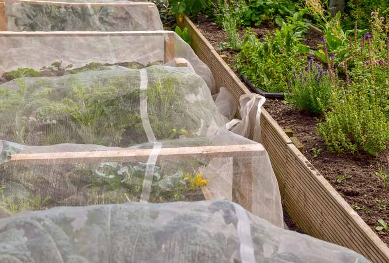 Floating row covers draped over homegrown veggies in a raised bed to prevent insect infestation.