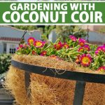 A planter with flowering annuals made mostly of coconut coir.