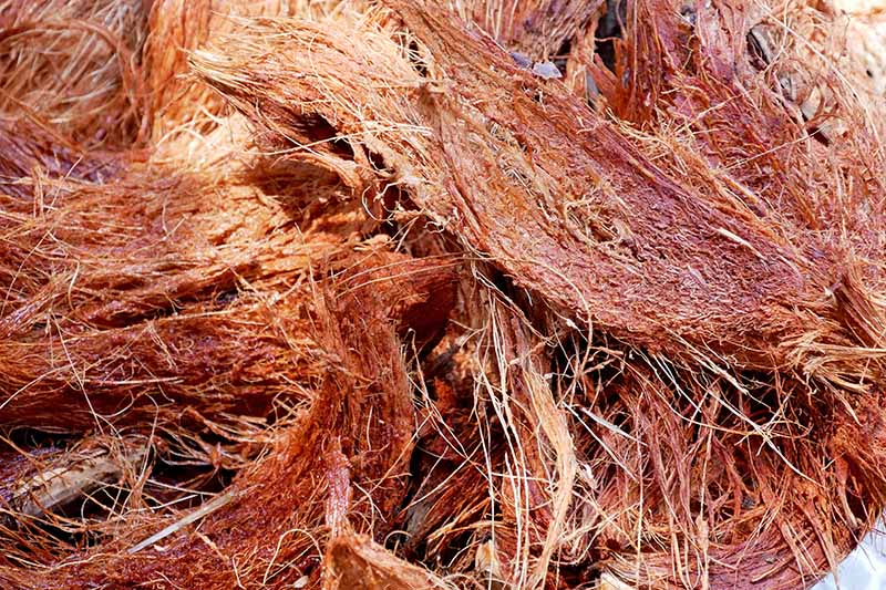 Coconut coir fiber, close up.