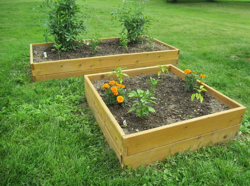 Both sizes of the Infinite Cedar raised garden bed planted with veggies in a grass-filled backyard.