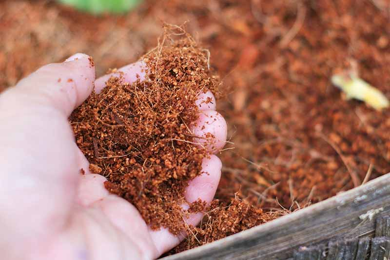 Handful of Coco Peat, close up, showing the fibers.