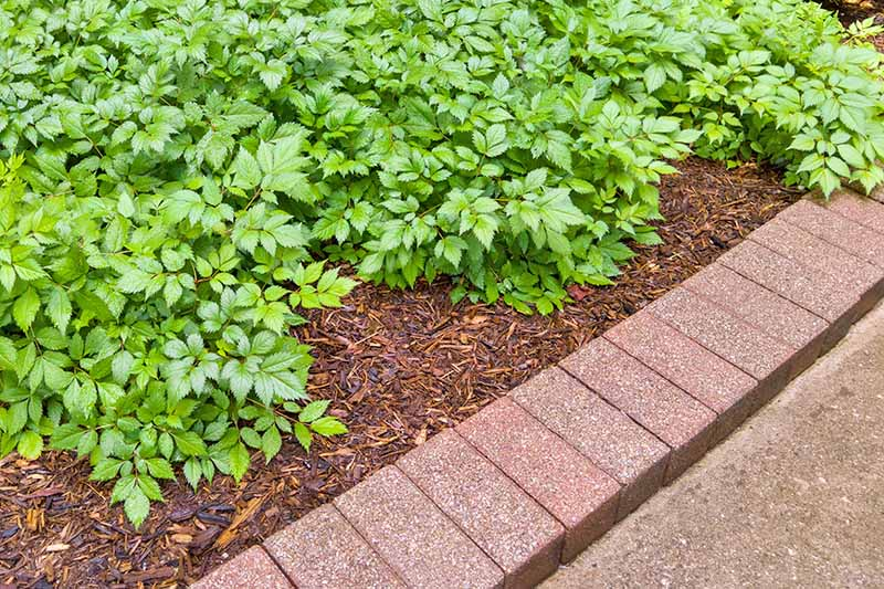 Horizontal image of a brick border between a cement sidewalk and a mulched garden bed, planted with green foliage.