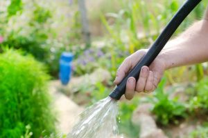 Let It Flow! The 7 Best Garden Hoses You Can Buy