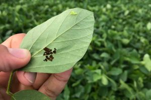 Integrated Pest Management: What It Is and How to Use It