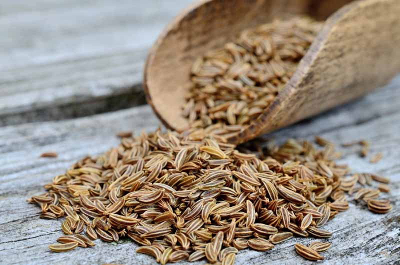Caraway seeds spilling out of a wooden scoop onto a weathered and gray wooden table.