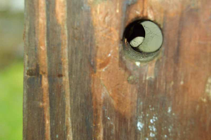 Damage to a porch post consisting of a drilled hole caused by carpenter bees.