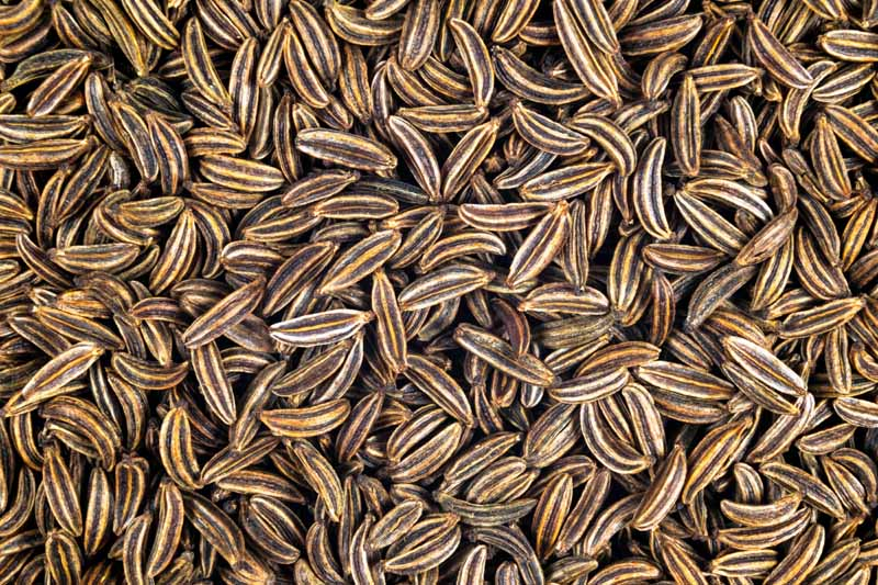 A batch of caraway seeds that have been harvested. Close up, top down view.