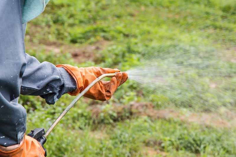 A pair of human hands using a pump sprayer to apply beneficial soil microbes.