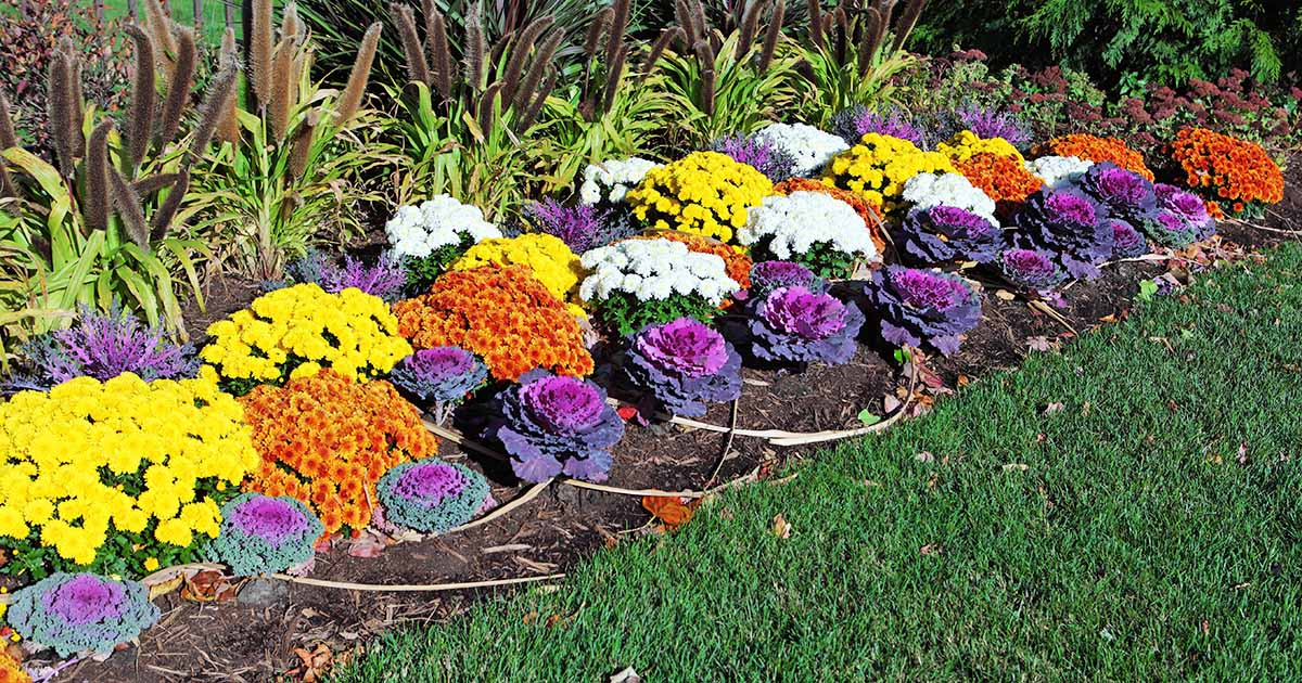 15 Of The Best Annuals For Vivid Fall Color Gardener S Path