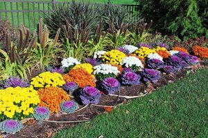 15 of the Best Annuals for Vivid Fall Color