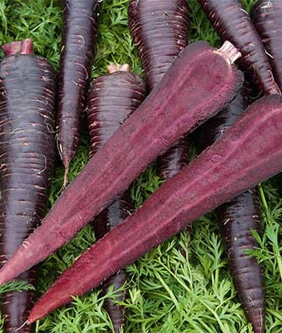 Deep Purple Hybrid Carrots