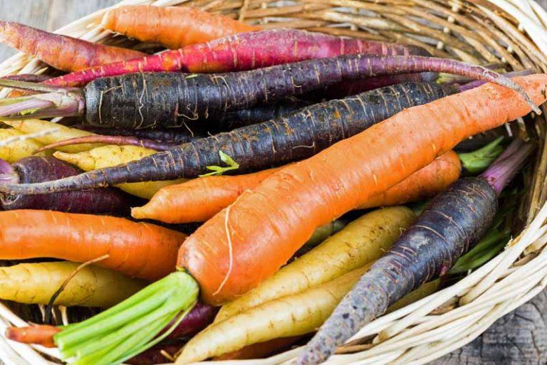 Select the Best Carrot Varieties - FB