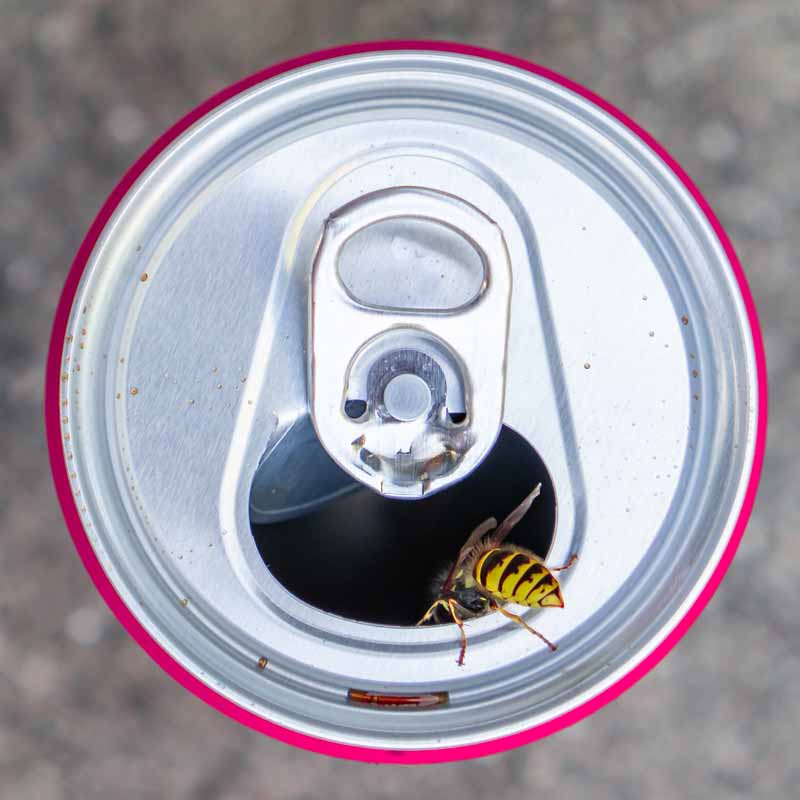 Top down view of a yellow jacket on a soda can.