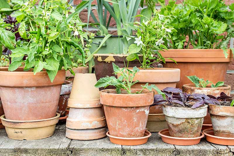 Horizontal head-on image of terra cotta pots of various sizes, stacked upside down, sitting in shallow terrra cotta saucers, and filled with small vegetable plants of various types, on a wooden deck with a brick wall in the background.
