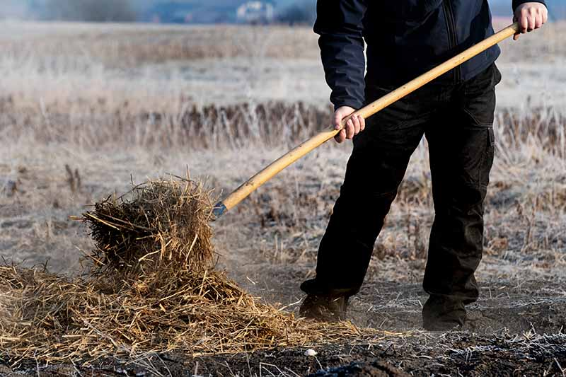Horizontal image of a man's legs and torso, clothed in a black jacket and pants, and brown boots, using a pitchfork to cover an area of ground with hay, with a brown, winter landscape in the background.