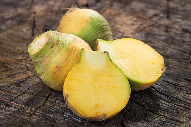 Horizontal image of two whole green and yellow rutabagas nestled next to one that has been sliced in half to show the golden flesh inside, on a brown wood surface.