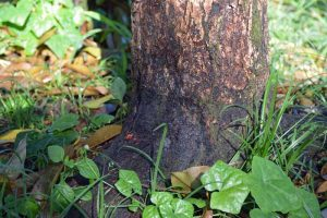 How to Identify, Prevent, and Treat Collar and Crown Rot in Fruit Trees