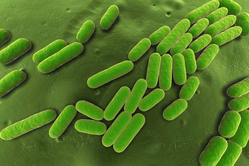 Close up of a graphic in green showing a microscopic view of the biofungicide bacillus subtilis.