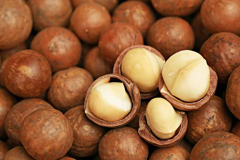 Top-down horizontal view of brown husked macadamias with four of them partially dehusked, showing the white kernel inside.