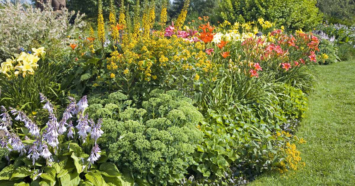 The 19 Best Perennials For Late Summer Color Gardener S Path,Viewing Checklist Questions To Ask When Buying A House Checklist