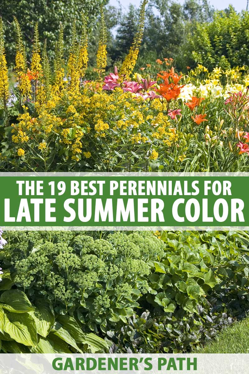 The 19 Best Perennials For Late Summer Color Gardener S Path,Chocolate Brown Chestnut Brown Hair Color Male