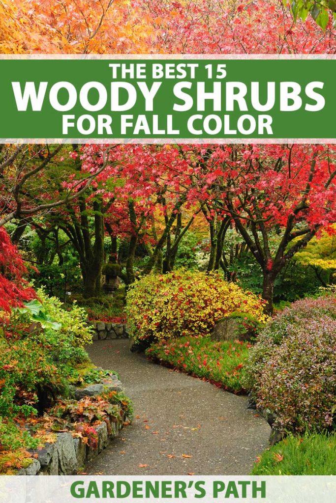 Red fall foliage of Autumn Jazz Arrowwood Viburnum