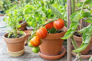 11 of the Best Vegetables to Grow in Pots and Containers
