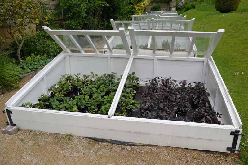 A row of white, victorian style cold frames growing vegetables in the fall.