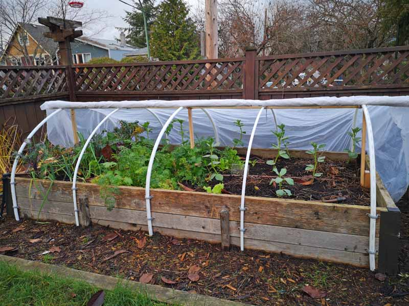 A row cover attached to a raised bed in a residential backyard. It has kale, spinach, and other cool weather crops gowing insided of it.