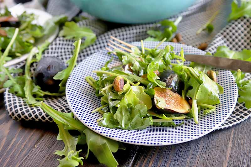 Arugula Dijon Salad with Figs, Pistachios, and Pea Shoots on blue and white patterned plate on a wooden table.