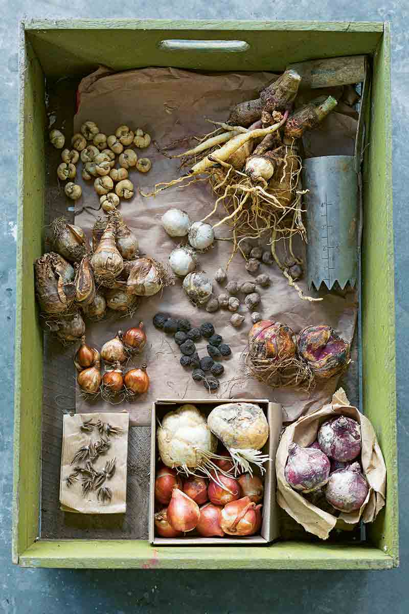 Vertical overhead image of a light green wooden crate with various plant bulbs arranged in groups in the bottom, on a blue-gray surface.