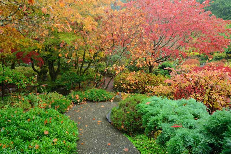 A Japanese garden with leaves turning red and yellow and green grasses.