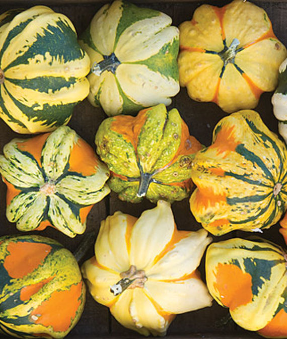 Coloruful harveted daisy gourd, top down view of nine specimens.