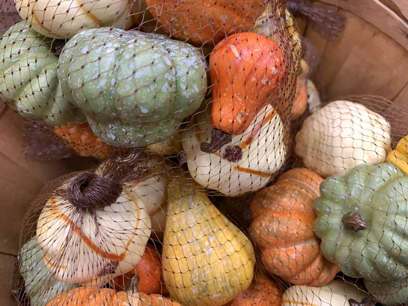 Close up photo of various decorative gourds and pumpkins being stored in plastic mesh bag.