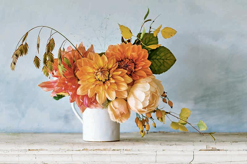 Horizontal image of peach-colored dahlias, ranunculus, and green leaves arranged in a white pitcher, on a weathered painted wood surface against a gray wall.