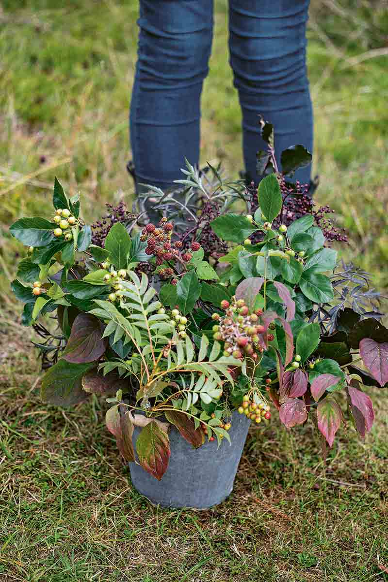 Vertical closely cropped image of a woman's legs in blue jeans in the background, with a bucket of foliage collected from the garden in front, on sparse green grass with brown soil showing through.