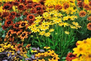 15 of the Best Perennials for Fall Color