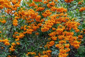 Why Autumn is the Best Time for Planting Shrubs