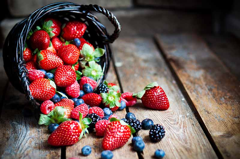 A dark basket, on it's side on a wooden table, spilling out a variety of fresh ripe berries.