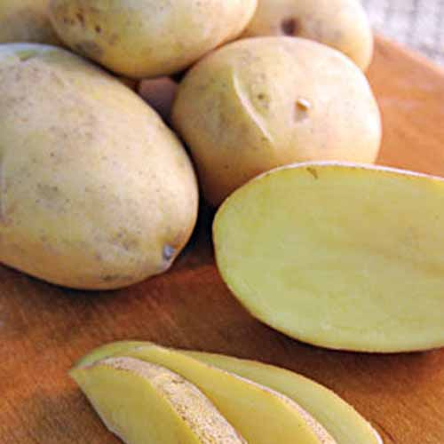 Close up of half a 'Daisy Gold' potato, showing light yellow flesh and brown skins. Three potato slices on a wooden surface, with whole, clean potatoes in the background.