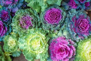 Is Ornamental Kale Edible?