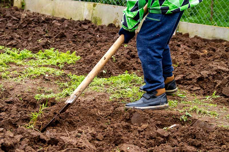 A person dressed in blue trousers, and a green and blue coat, holding a spade and digging the garden. The background is of freshly dug soil and a few stray weeds.