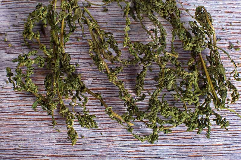 Dried epazote plants on a rustic wooden surface.