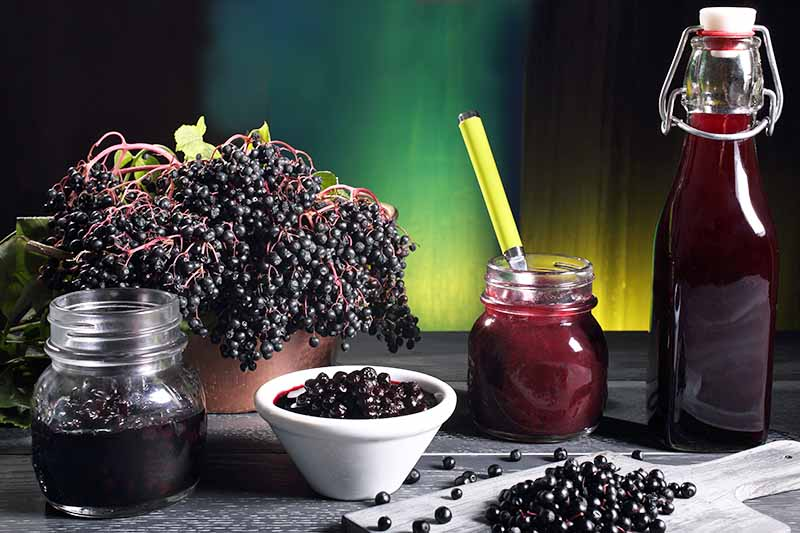 On the left, a cluster of elderberries still on the stem overflows from a ceramic bowl. Next to it, a jar of elderberry jam with a spoon, and a bottle of elderberry syrup. In the foreground, a jar of cooked elderberries in liquid next to a white bowl of the same. Front left shows elderberries off the stalks on a cutting board.