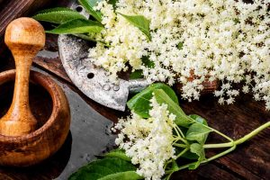How to Use Elderflowers for Food and Medicine