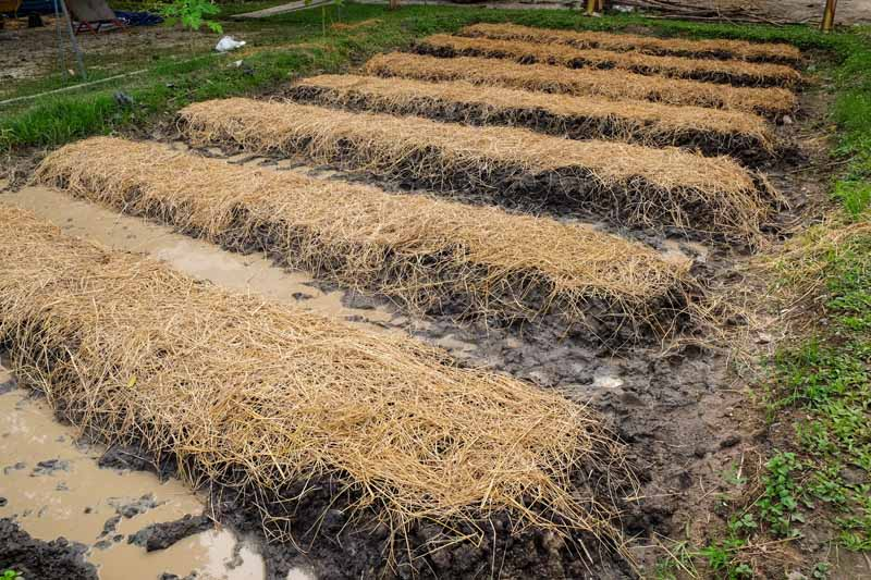 Empty raised garden beds covered in straw in preparation of winter
