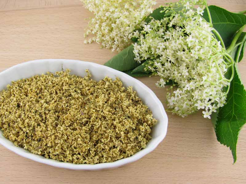 Fresh and dried elderflowers. Top down view.
